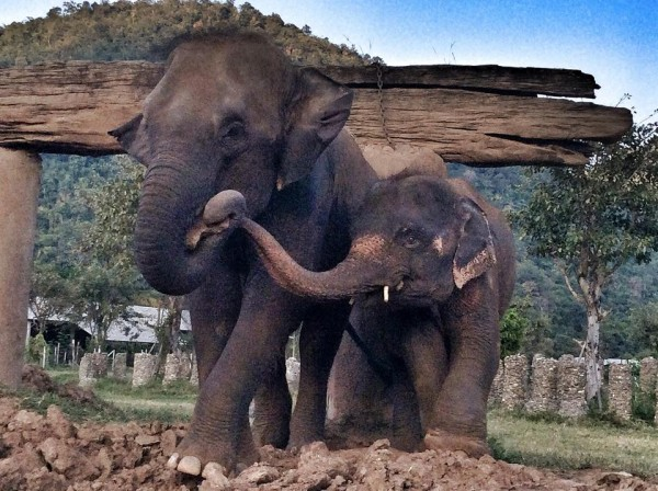 Elephant Nature Park2