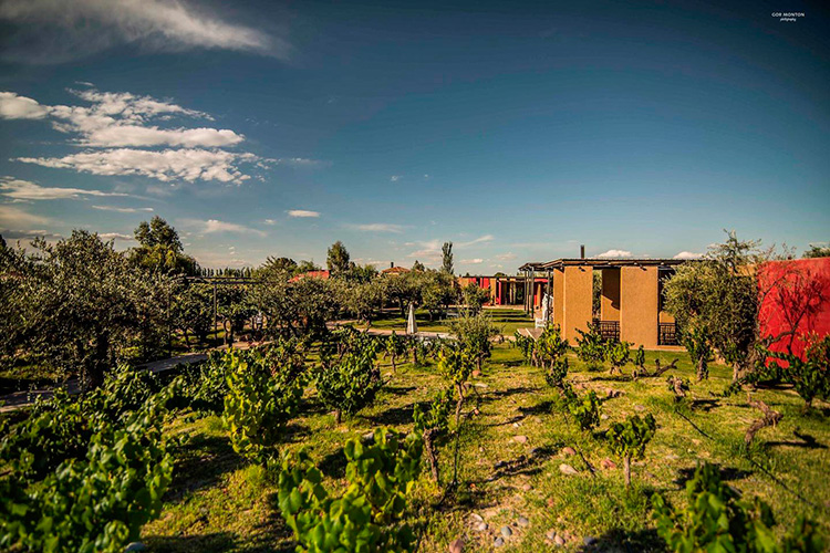 Bodega Casa El Enemigo, Mendoza (Foto: divulgação)