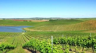 Guia Portugal: a rota dos Vinhos Verdes