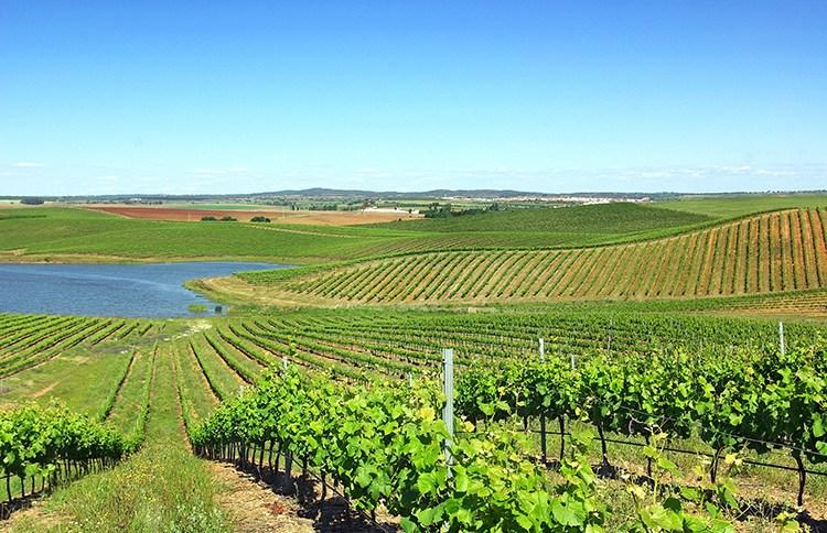 Região dos Vinhos Verdes é destino ideal para amantes de bons vinhos