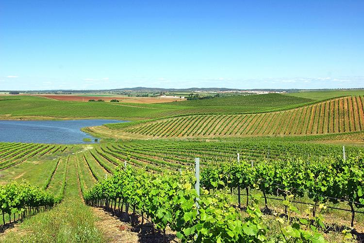 Região dos Vinhos Verde, Portugal (Foto: Adobe Stock)