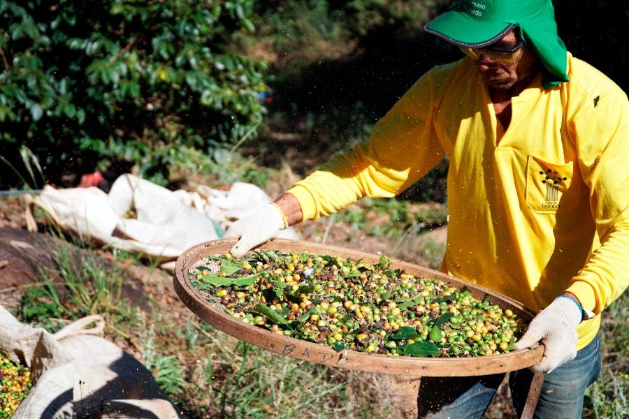 Funcionário da Fazenda Baobá peneirando grãos de café