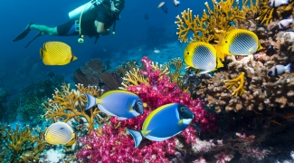 Mergulhe com tubarões e nade com golfinhos com estas experiências virtuais no fundo do mar