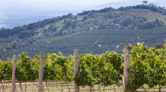 Vinícola brasileira é premiada em competição na França