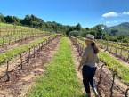 Vinhos da Mantiqueira: 5 vinícolas da serra para conhecer já!