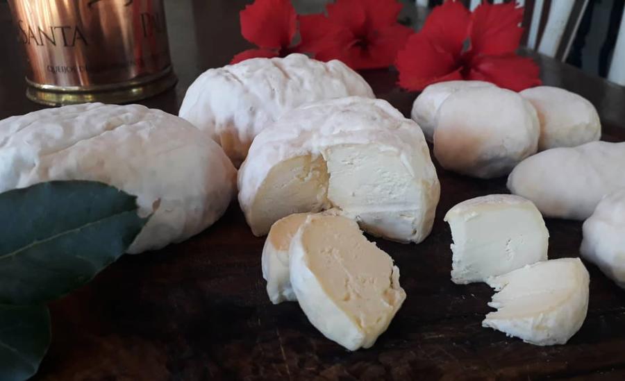 Mofos Brancos queijos da Leiteria Santa Paula