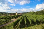 Um guia com os melhores vinhos da Serra da Mantiqueira para degustar