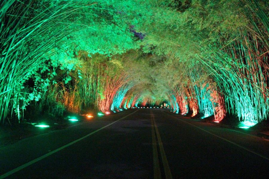 tunel bambuzal morungaba
