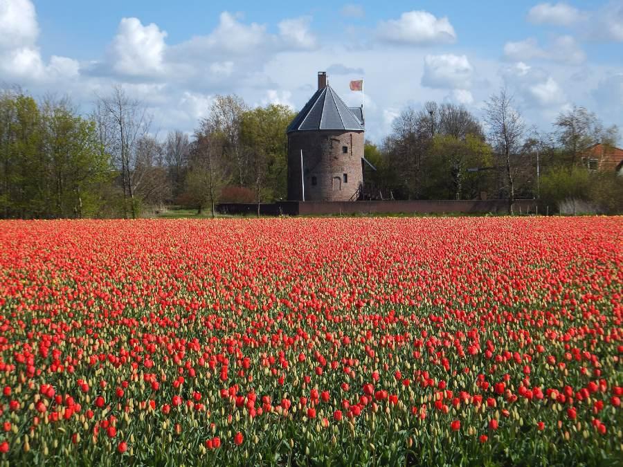 campo de tulipa area rural holanda
