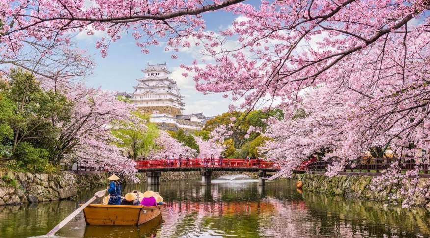 Chegada da primavera no Japão é marcada pelo florescimento das cerejeiras, um dos símbolos do país