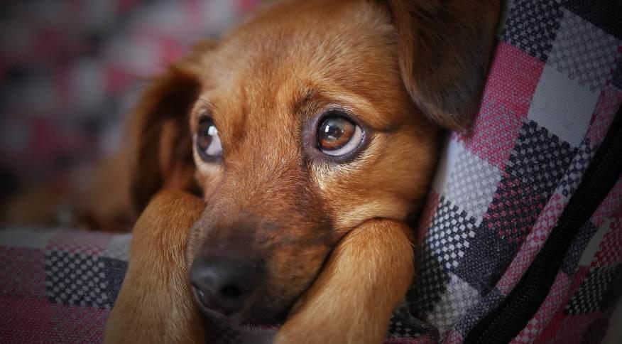 Conforto e o bem-estar animal estão entre os motivos que levam passageiros a optarem pela viagem via jatos particulares