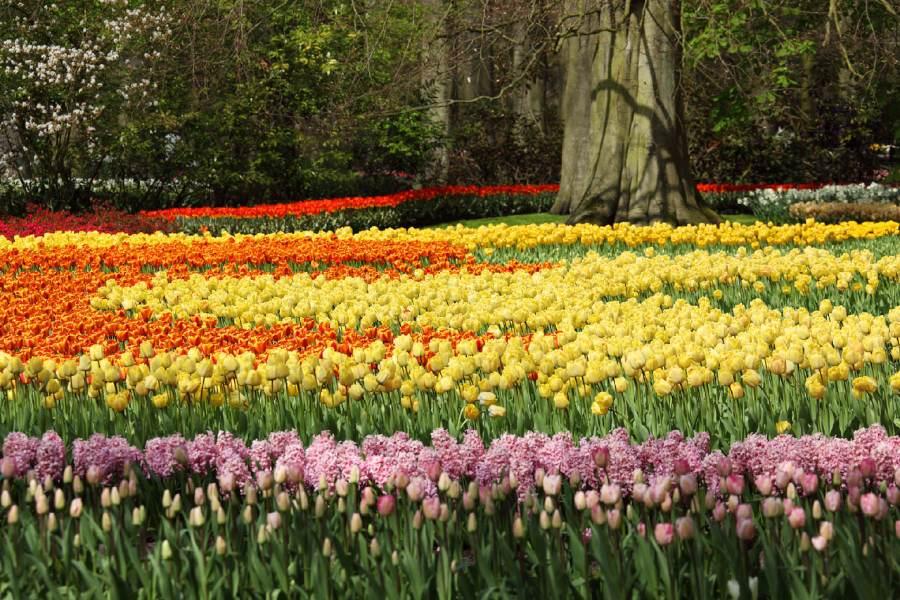 tulipas em Keukenhof holanda