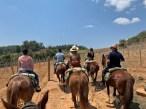 Enoturismo: vinícola na Serra da Mantiqueira une cavalgada e degustação