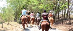 Vinícola na Serra da Mantiqueira une cavalgada e degustação